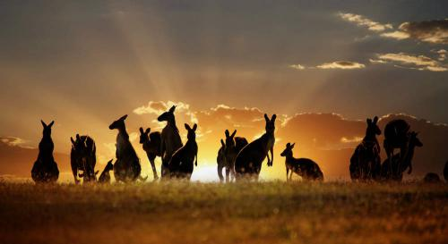 ludys-reizen-rondreizen-australie-01