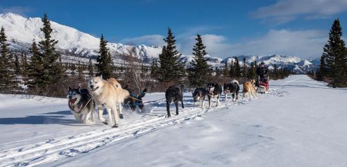 ludys-reizen-wintersport-sledehonden-01